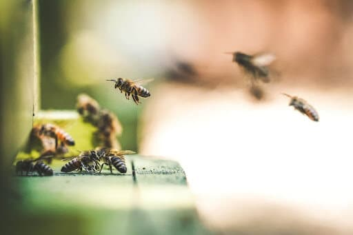 bees permaculture