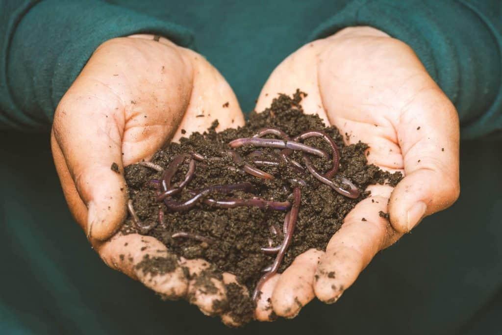 mulch soil