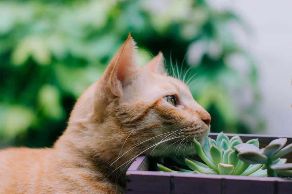 scindapsus plant safe for pets