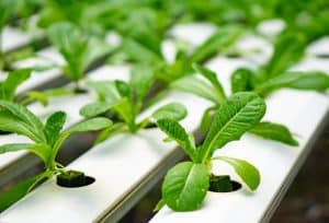 best hydroponic nutrients for vegetables